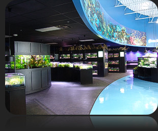 Why Aquarium Adventure?