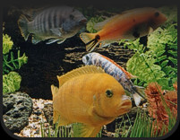 View Our Selection of Available Fish